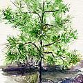 Lake Tahoe Tree by John D Benson