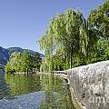 Lakefront With Trees by Mats Silvan