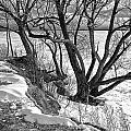 Lakeshore  by Burney Lieberman