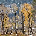 Lamar Valley In The Fall by Carolyn Fox