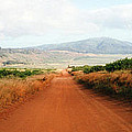 Lanai Road by C Sitton