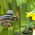 Land Snail 5698 by Michael Peychich