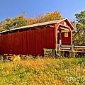 Landis Mill Covered Bridge by Nick Zelinsky