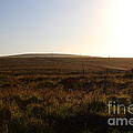 Landscape At Point Reyes California . 7d9958 by Wingsdomain Art and Photography