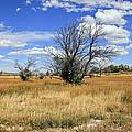 Landscape In Wy by James Steele