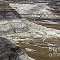 Landscape Petrified Forest by Bob Christopher