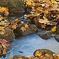 Last Signs Of Autumn 0438 by Michael Peychich