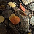 Last Vestige Of Fall by Jerry McElroy