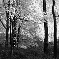 Lasting Leaves by Kathleen Grace