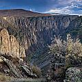 Late Afternoon At Black Canyon Of The Gunnison by Greg Nyquist
