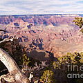 Late Afternoon At The South Rim by Bob and Nancy Kendrick