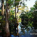 Late Afternoon At The Swamp by Ester  Rogers