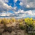 Late Summer Dunes Ocean City by Jim Moore