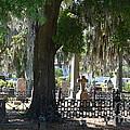 Laurel Grove Cemetery - Savannah Georgia by Randy Edwards