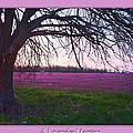 Lavander Morning by Debbie Portwood