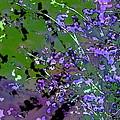 Lavender 2 by Pamela Cooper