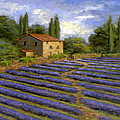 Lavender Fields In The Sun by Curt Snarr