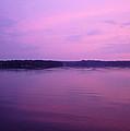 Lavender Glow by Shirley Radebach
