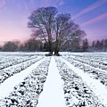 Lavender In Winter by Getty Images