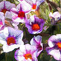 Lavender Million Bells Flowers by Elaine Plesser