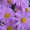 Lavender Mum Bouquets by Lingfai Leung