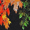 Lavish Leaves 5 by Will Borden