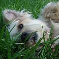 Lazy Dog by Bobby Martin