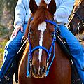 Lead Horse by Bill Owen
