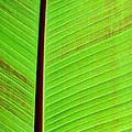 Leaf Abstract by Sabrina L Ryan
