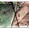 Leaf After Rain by Marie Jamieson