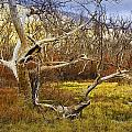 Leaf Barren White Tree Trunk In California No.1500 by Randall Nyhof