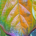 Leaf by Bill Owen
