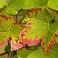Leaf Design by Jean Noren