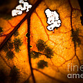 Leaf Detail by Kim Henderson