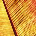 Leaf by Ian Merton