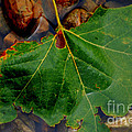 Leaf In The River by Anjanette Douglas