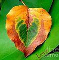 Leaf Leaf Heart Love by Renee Trenholm