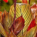 Leaf Lines by Lauri Novak