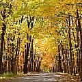 Leaf Lit Path by Kim Hymes