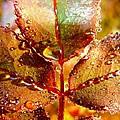 Leaf Me Alone by Shannon Blanchard