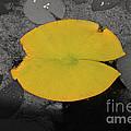Leaf On A Pond II by Donna Greene
