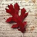 Leaf On Letter by Garry Gay