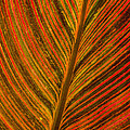 Leaf Pattern Abstract by Darleen Stry