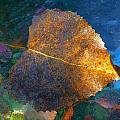 Leaf Portrait 5 by Beth Akerman