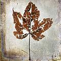 Leaf  With Textured Effect by Bernard Jaubert