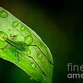 Leafhopper 2 by David Weeks