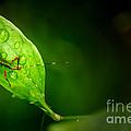 Leafhopper 3 by David Weeks