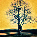 Leafless Tree by Jutta Maria Pusl