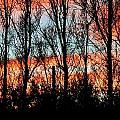leafless Trees by Werner Lehmann