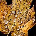 Leafwash by Burney Lieberman